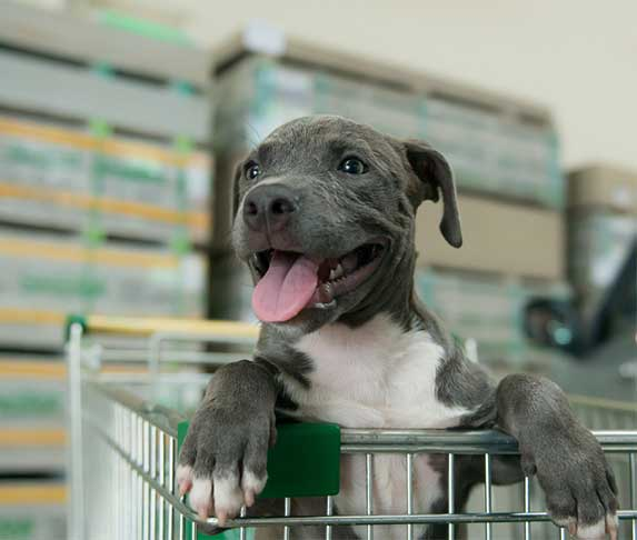 puppy on a shopping cart