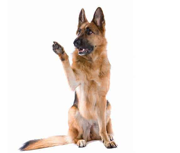 GSD on white background