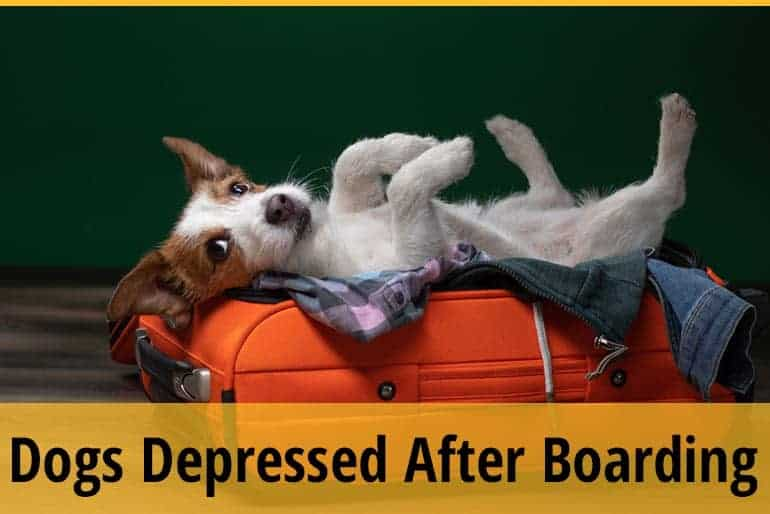 Why Do Dogs Become Depressed After Boarding