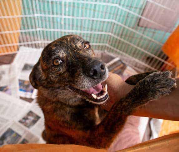dog ready for adoption