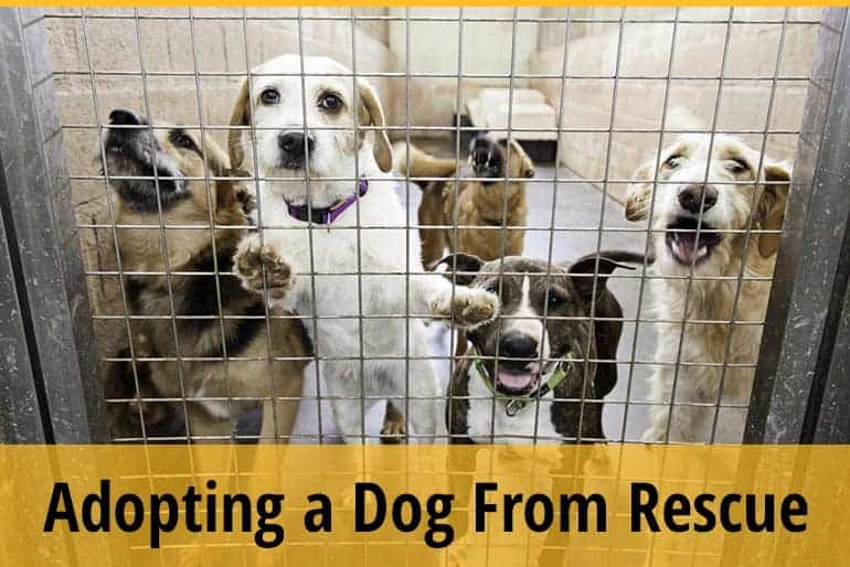 Why Is It So Hard To Adopt A Dog From A Rescue