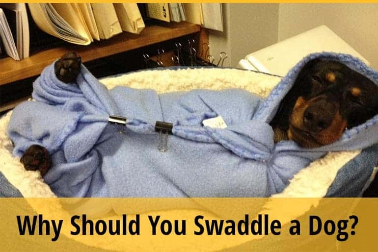 Why you should swaddle a dog