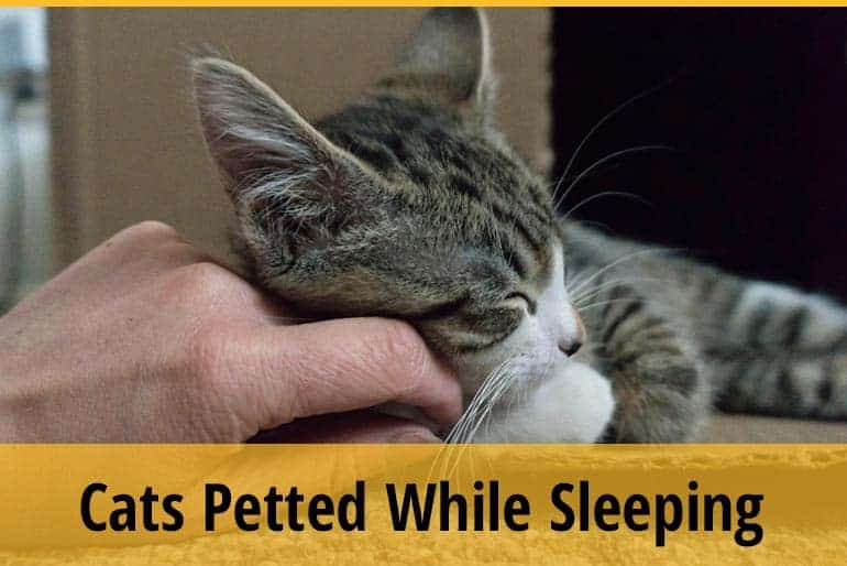 Do Cats Like to Be Petted While Sleeping