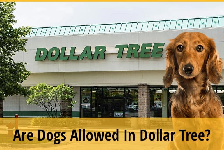Are Dogs Allowed In Dollar Tree