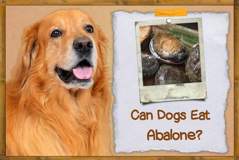 Can Dogs Eat Abalone