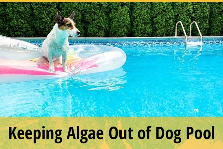How to Keep Algae Out Of Dog Pool