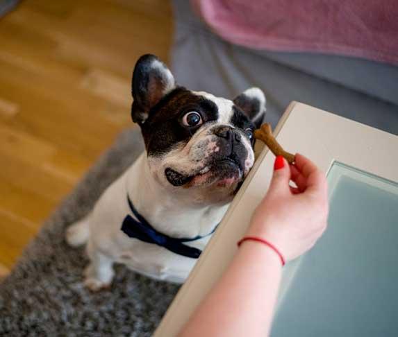 dog looking at treats