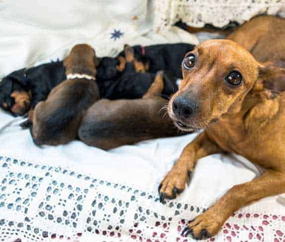 new mother dog looking at the camera