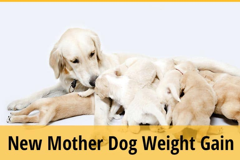 How to Make Your Dog Gain Weight After Giving Birth