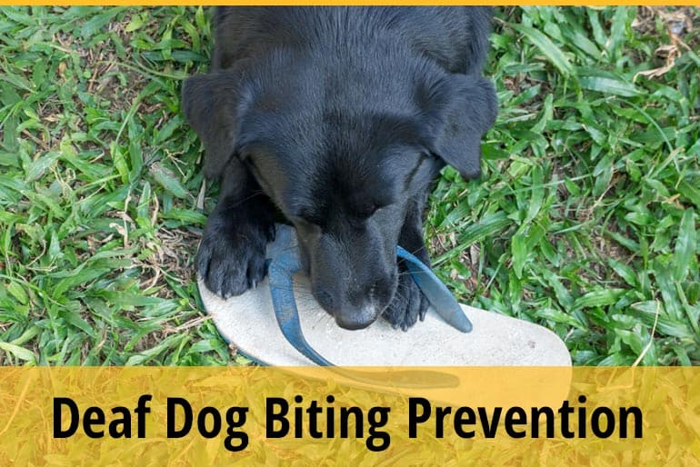 How to Teach a Deaf Dog to Stop Biting?