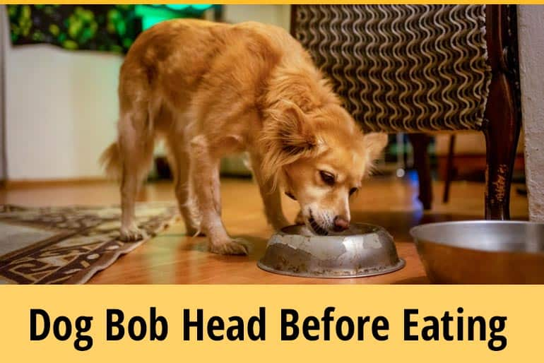 Why Do Dogs Bob Their Heads Before Eating