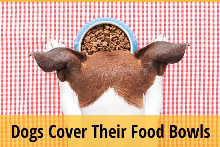 Why Do Dogs Cover Their Food Bowls