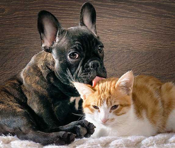 puppy licks a cat