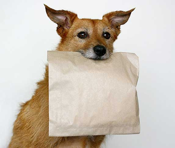 dog carrying brown paper bag