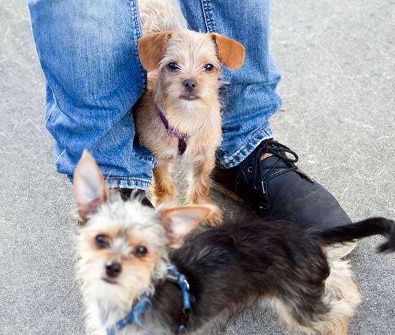 puppy hiding between owner's legs