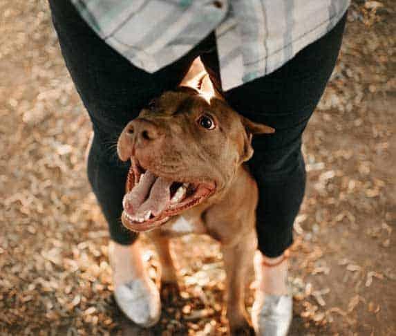dog hiding between owner's legs