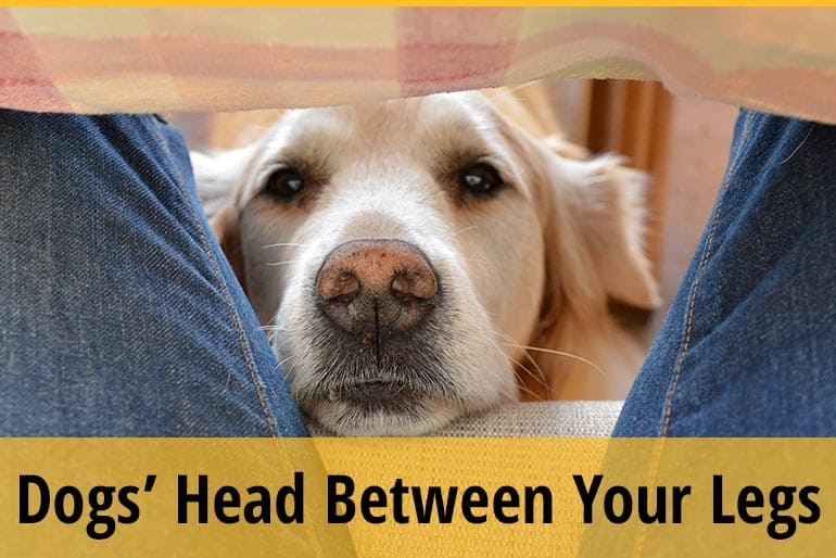 Why Do Dogs Put Their Head Between Your Legs