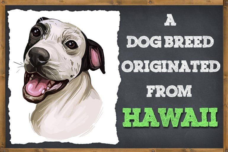 A Dog Breed that Originated in Hawaii