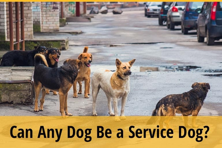 Can Any Dog Be a Service Dog