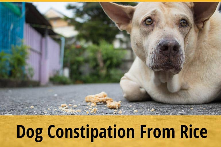 Can Dogs Get Constipated From Rice