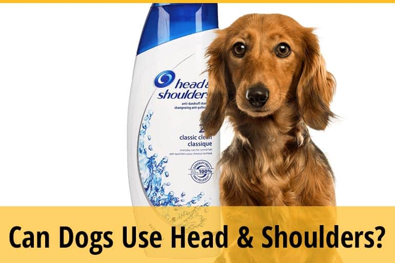 Can You Use Head And Shoulders On Dog