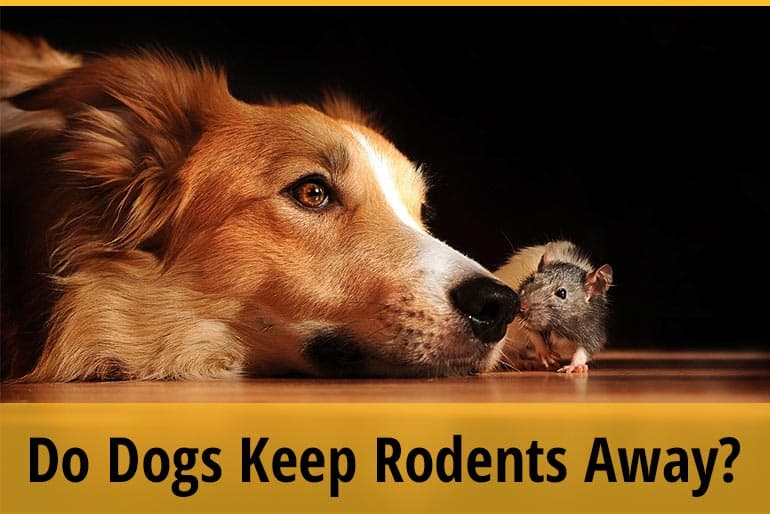 Do Dogs Keep Rodents Away