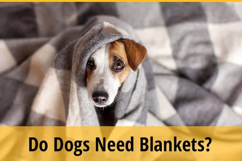 Do Dogs Need Blankets
