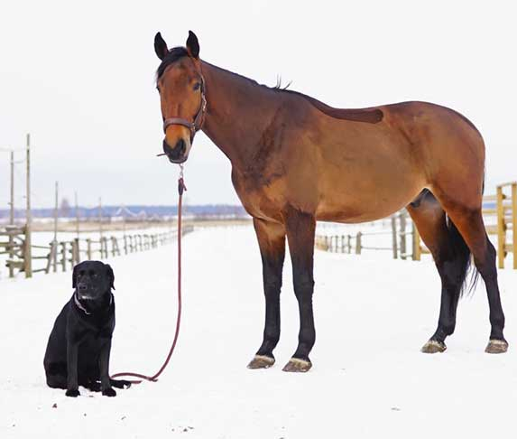 a dog and a horse