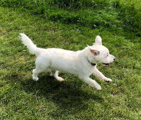 dog gallop