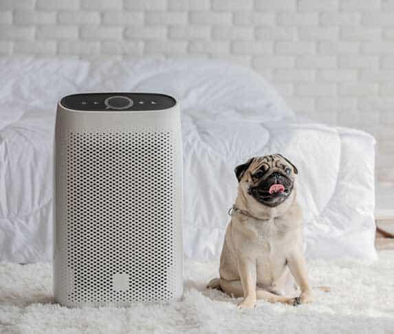 dog near humidifier