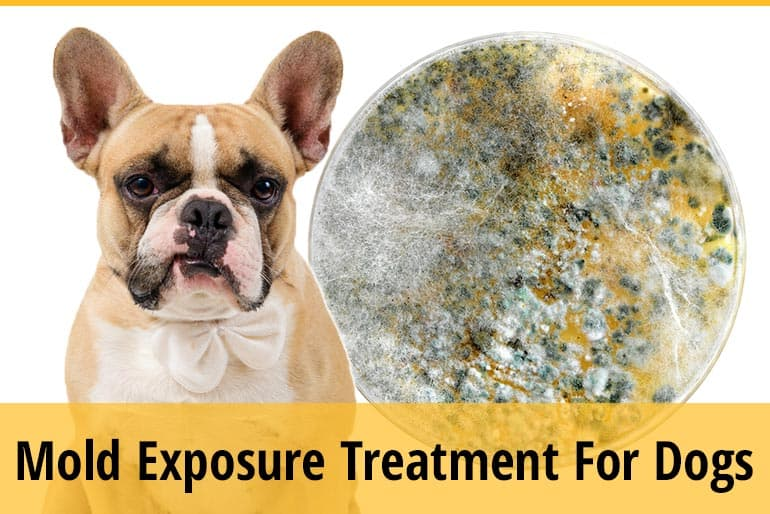 How To Treat Mold Exposure In Dogs