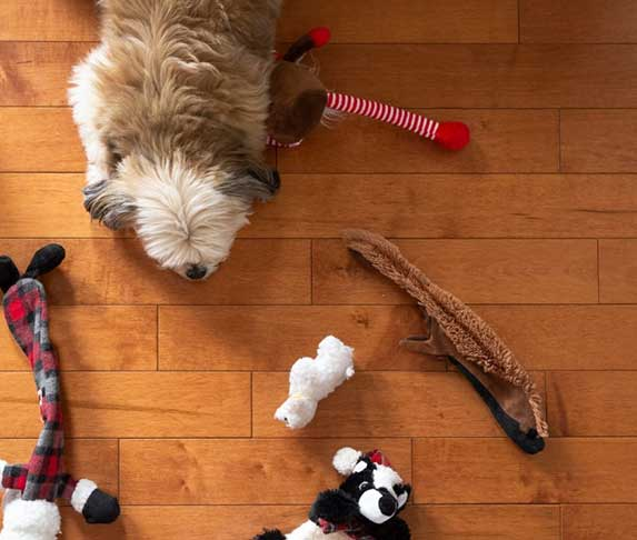 dog surrounded with toys