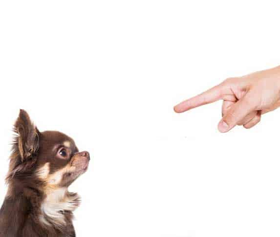 dog being scolded