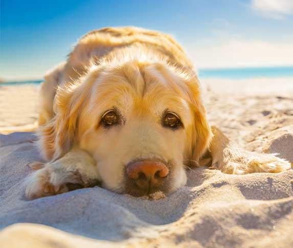 dog under the sun
