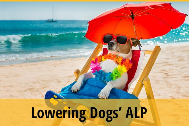 How To Lower Alkaline Phosphatase Levels In Dogs