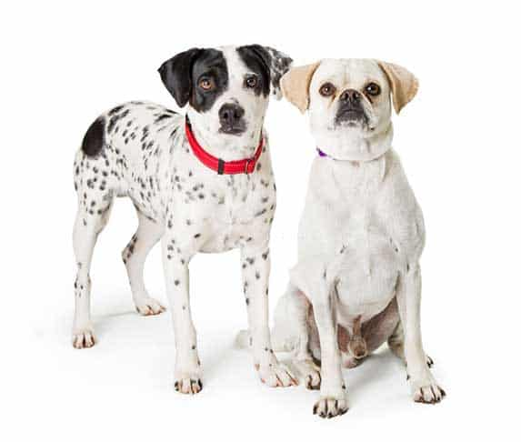 two dogs on white background