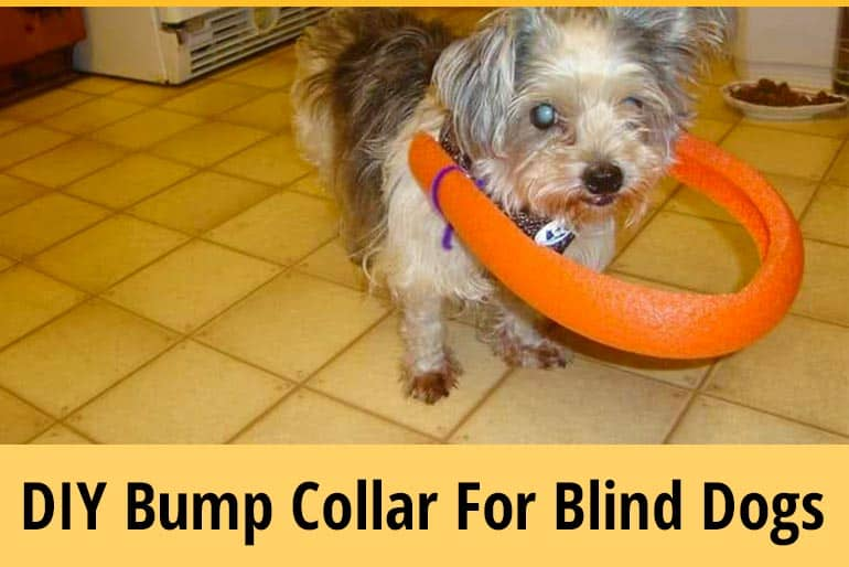 How to Make A Blind Dog Bumper Collar at Home