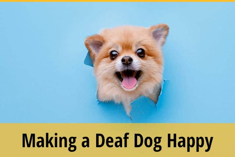 How to Make A Deaf Dog Happy