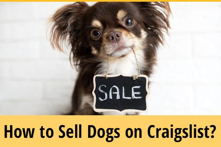How To Sell Dogs On Craigslist