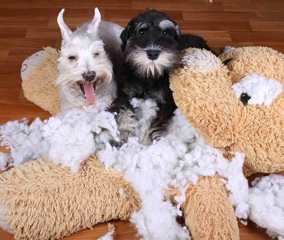 two dogs destroy a stuffed animal toy