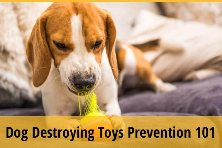 How to Train A Dog Not to Destroy Toys