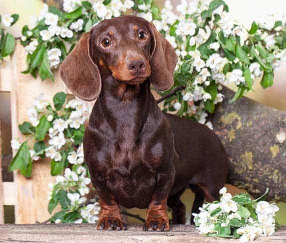 dog surrounded with jasmine flower
