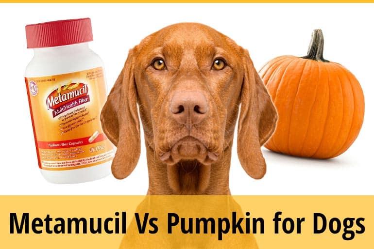 Metamucil Vs Pumpkin For Dogs