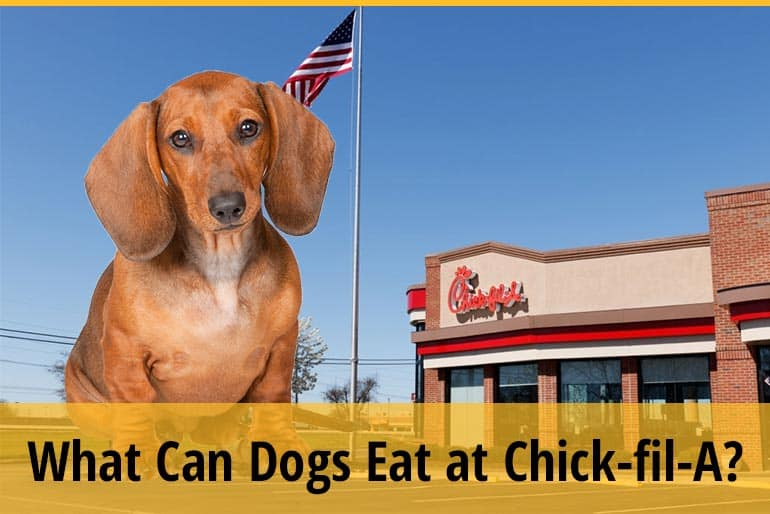What Can Dogs Eat at Chick-fil-A