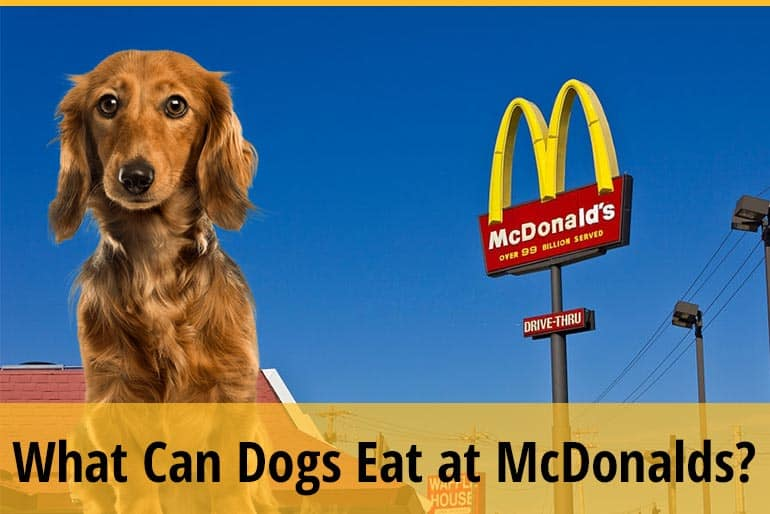 What Can Dogs Eat at McDonald's