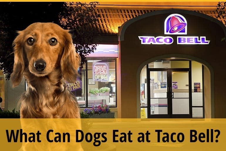 What Can Dogs Eat at Taco Bell?