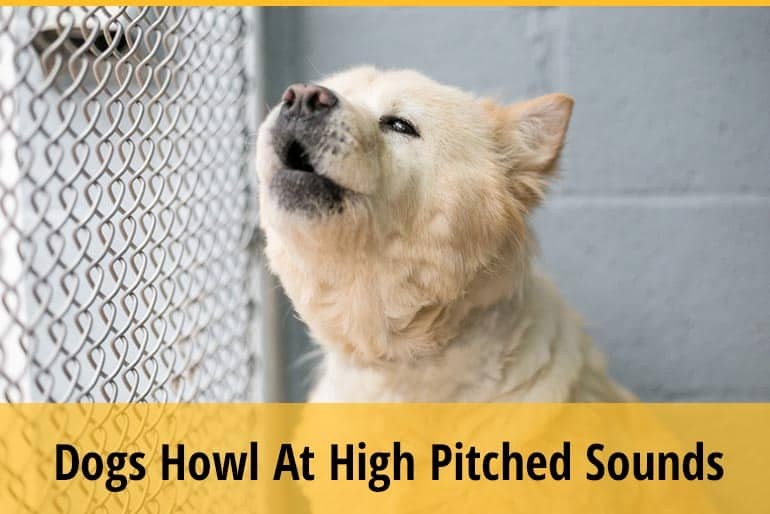 Why Do Dogs Howl At High Pitched Sounds