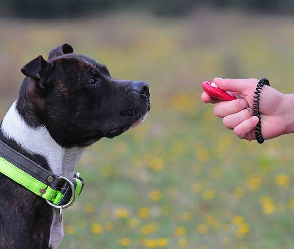 dog with clicker