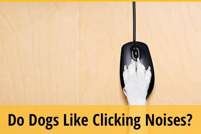 Why Do Dogs Like Clicking Noises