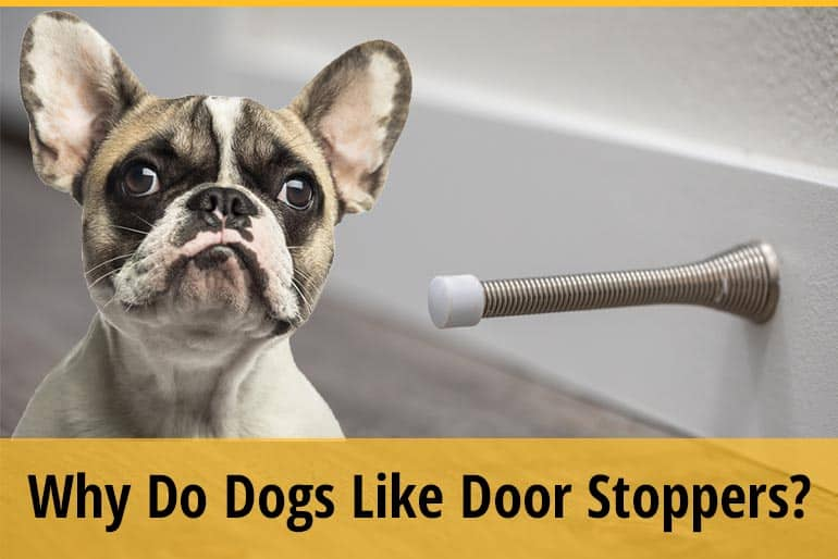 Why Do Puppies Like Door Stoppers